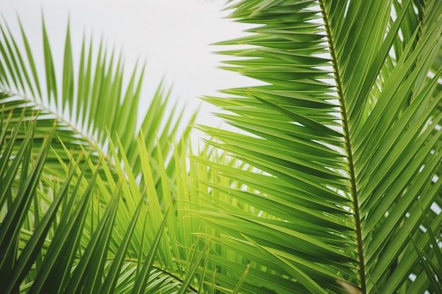 Groene palmtakken