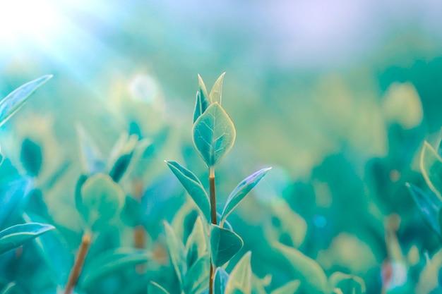 Groene plant bladeren in de natuur in de lente