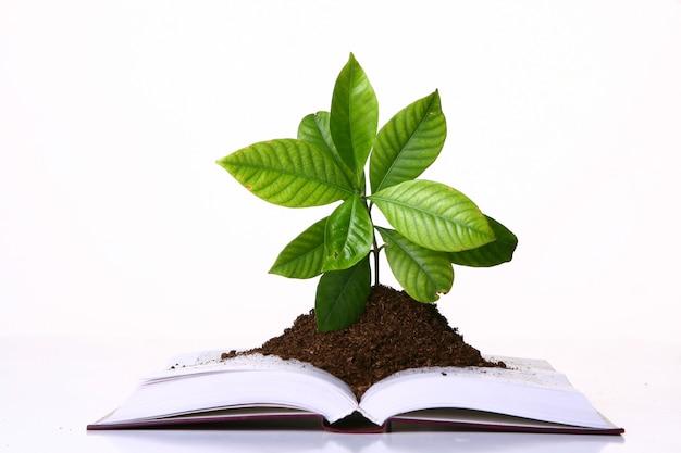 Groene plant groeit op de pagina's van een boek