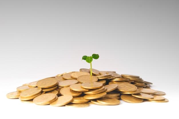 Groene plant groeit uit de munten. geld financieel concept.
