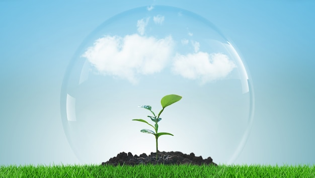 Groene plant groeit