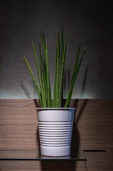 Groene plant in een pot op donkere achtergrond.