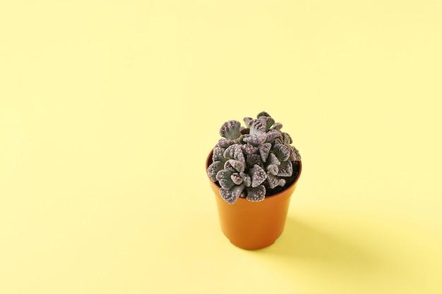 Groene plant in een pot op gele achtergrond