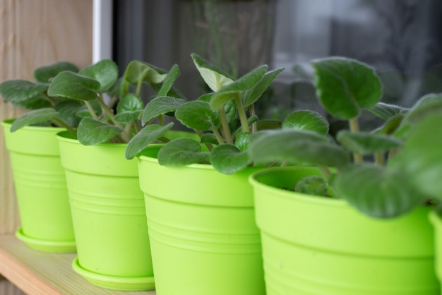 Groene plant monstera op een witte achtergrond.