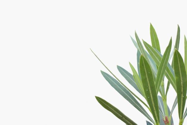 Groene plant op een wit geïsoleerd oppervlak