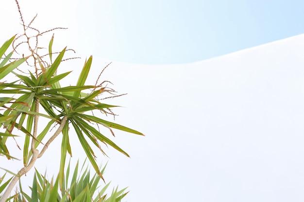 Groene plant op hemeloppervlak en wit geïsoleerd oppervlak