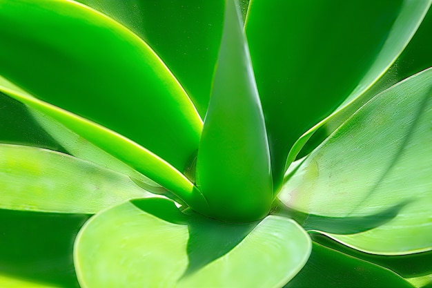 Groene plant yucca of tree of life van heel dichtbij gevangen, close-up in namibië