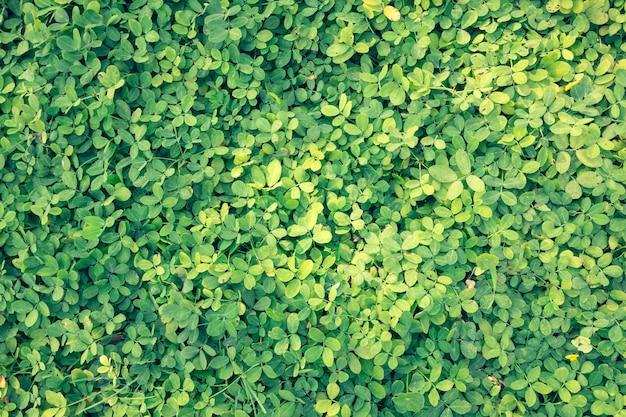 Groene planten en gras op de vloer