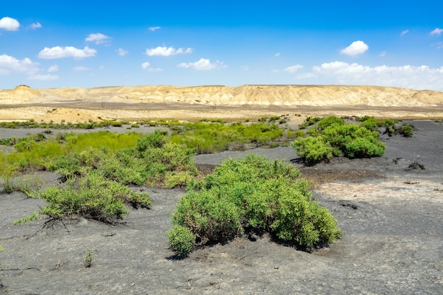 Groene planten in de woestijn, oase