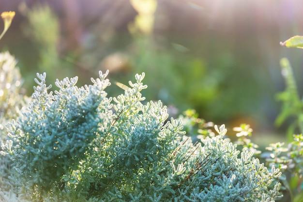 Groene planten in de zomertuin