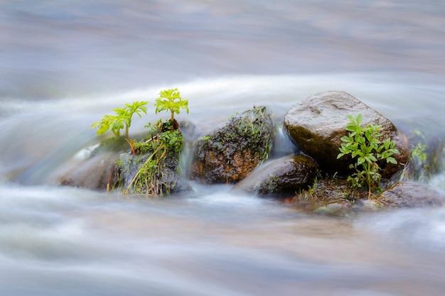 Groene planten in het water, overstroomde rivier