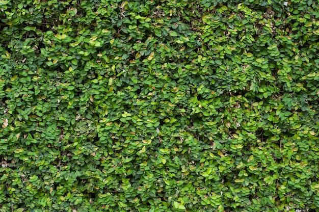 Groene planten muur textuur
