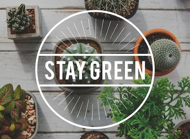 Groene planten plantkunde planten hobby