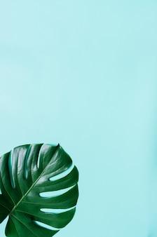 Groene plat lag tropische monstera blad op cyaan blauwe achtergrond. ruimte voor tekst, kopiëren, belettering.