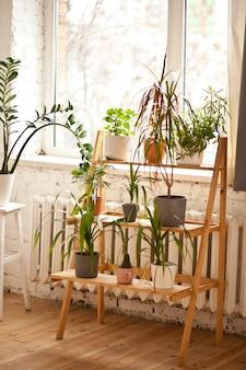Groene potbloemen dichtbij door raam. huis tuinieren concept.