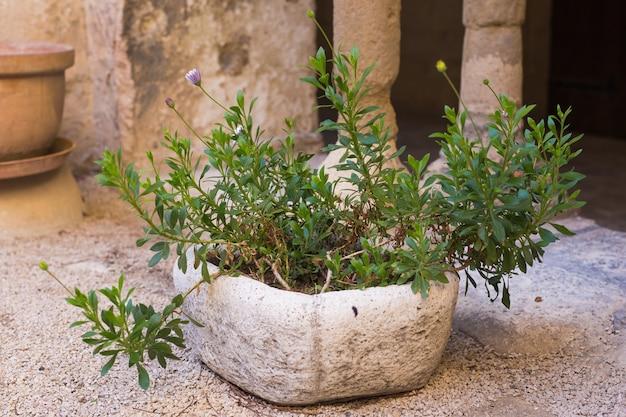 Groene potplanten in mooie pot buiten.