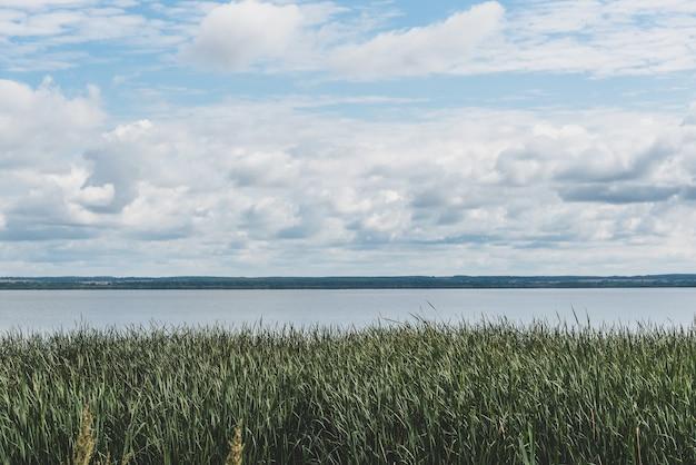 Groene rietstruiken groeien aan de oever van een groot rustig meer met azuurblauw water onder een schilderachtige blauwe lucht met pluizige witte wolken op een luie zomerdag.