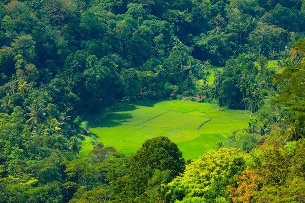Groene rijen velden