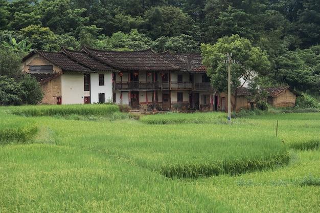 Groene rijst groeit in het rijstveld en er is een oud huis in het midden van het rijstveld
