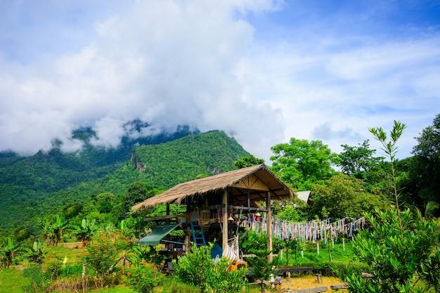 Groene rijstvelden geplant in een resort tijdens het regenseizoen in de provincie saraphi district chiang mai