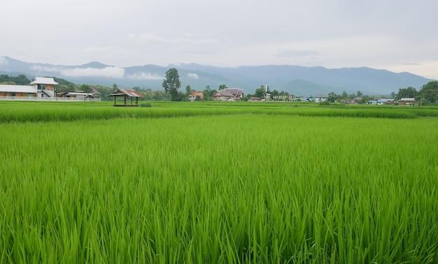 Groene rijstvelden in het regenseizoen en prachtige natuur in de bergen