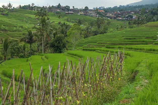 Groene rijstvelden jatiluwih op het eiland bali, indonesië zijn unesco-erfgoed, het is een van de aanbevolen plaatsen om te bezoeken op bali met het spectaculaire uitzicht