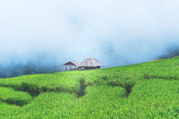 Groene rijstvelden op bergketen, met witte mist achtergrond,