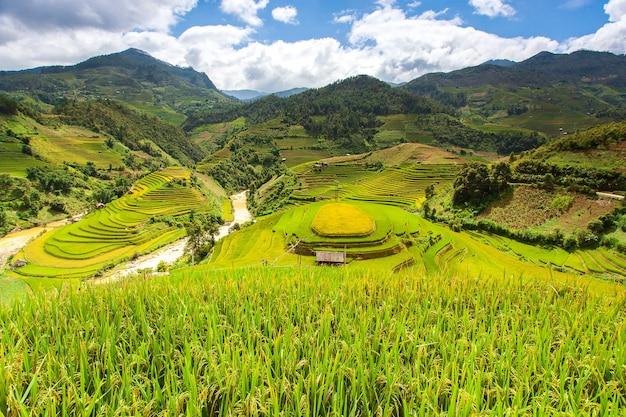 Groene rijstvelden op terrassen in muchangchai, vietnam rijstvelden bereiden de oogst voor in het noordwesten