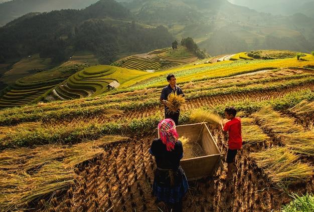 Groene rijstvelden op terrassen in muchangchai, vietnam