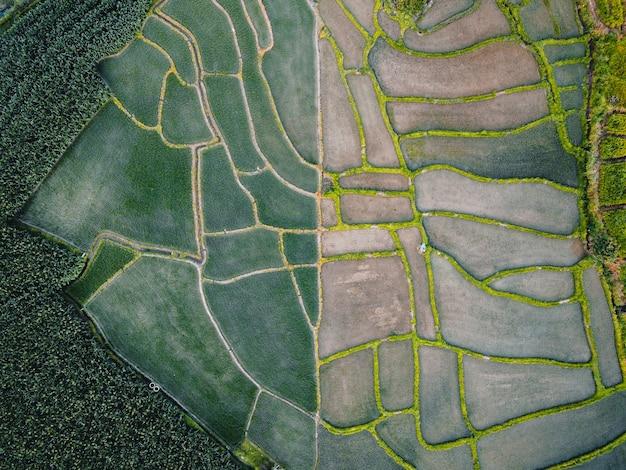 Groene rijstvelden uitzicht op rijstvelden, rijstvelden en bergen