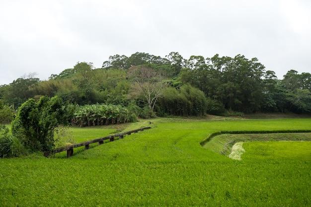 Groene rijstvelden, witte wolken, bergen in hualien, taiwan.