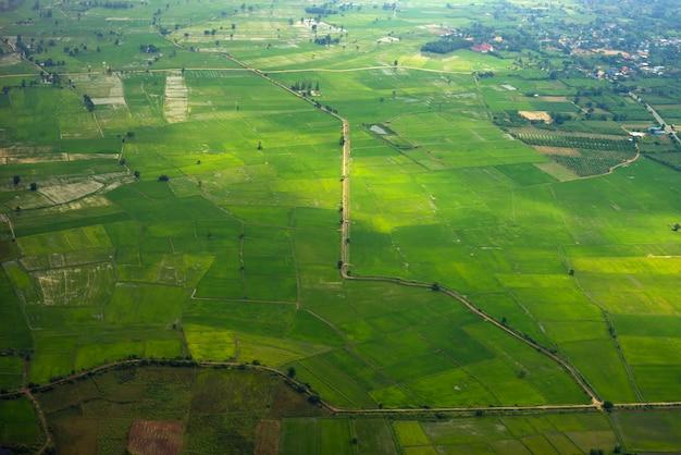 Groene rijstvelden