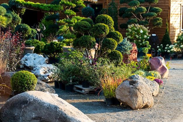 Groene ruimtes, struiken en struiken met bloemen voor landschapsarchitectuur en landschapsontwerp