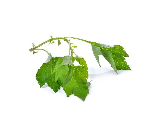 Groene selderij op witte achtergrond