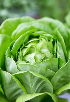 Groene sla gezonde levensstijl en gezond eten