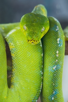 Groene slang op een tak