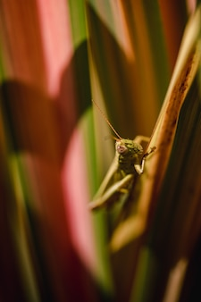 Groene sprinkhaan zat op bruine stengel in close-up overdag