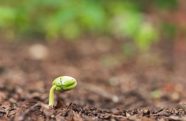 Groene spruit die uit de grond groeit.