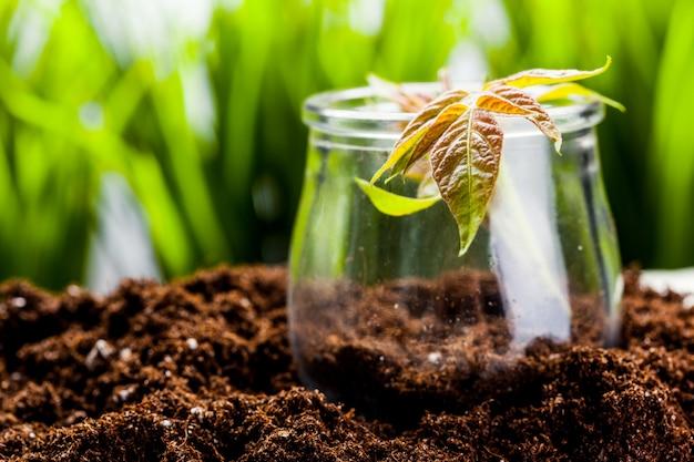 Groene spruit groeit uit zaad in organische grond