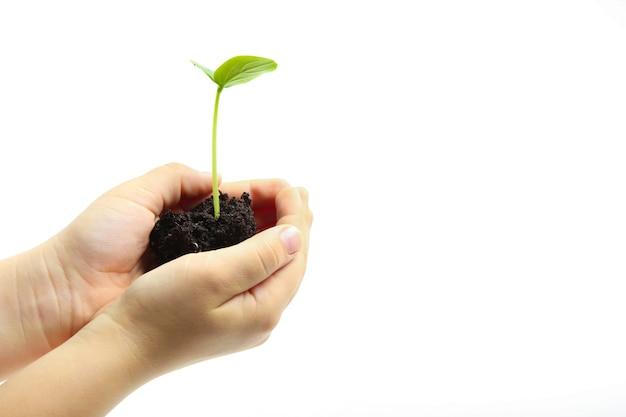 Groene spruit in de handen van een mens