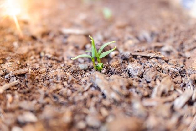 Groene spruit van een plant in een plantage