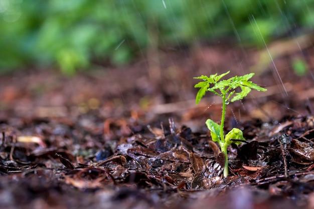 Groene spruiten in de regen
