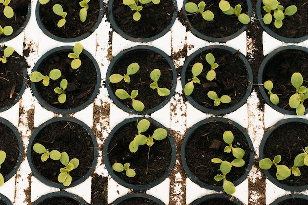 Groene spruiten in potten in een serre, bovenaanzicht