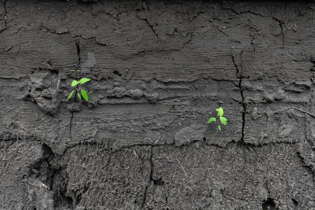 Groene spruiten ontspruiten uit droge gebarsten aarde