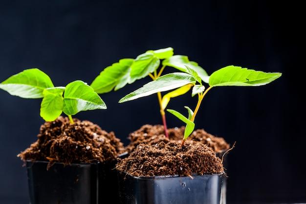 Groene spruiten zijn in de grond ontsproten