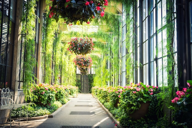 Groene steeg met bloemen die in potten hangen.