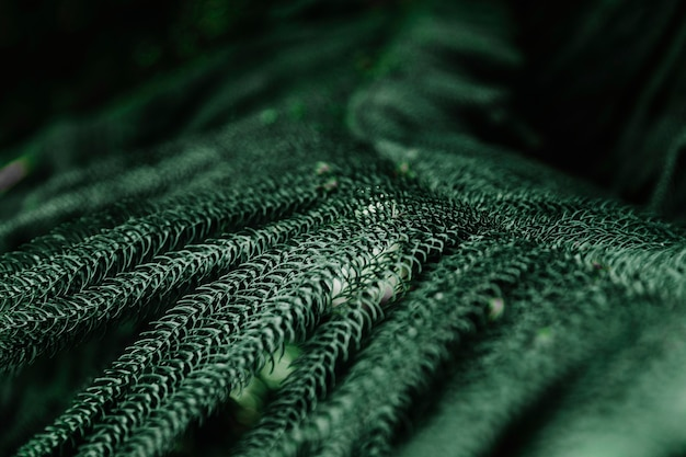 Groene stekelige takken van een spar of den