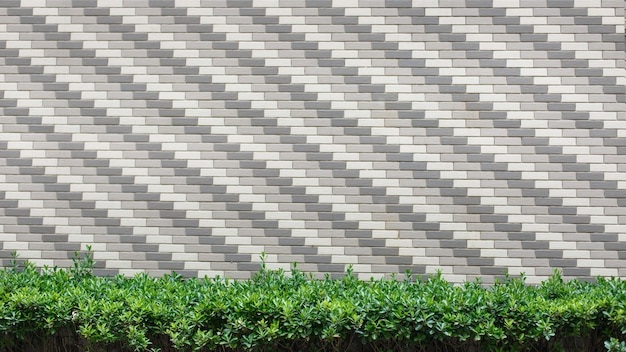 Groene struiken op muurbakstenen