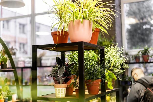 Groene succulent in een kleipot in zolderbinnenland in skandinavische stijl