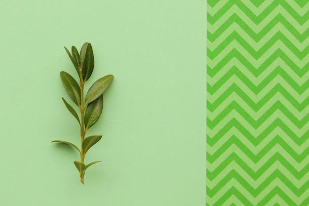 Groene tak op de mint oppervlak